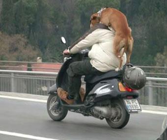gordaco con perro en la moto